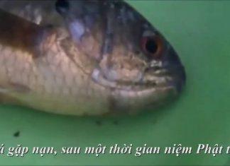 phat-phap-van-dap-8-thuc-hu-chuot-vang-sanh-niem-phat-cuu-ca-chet