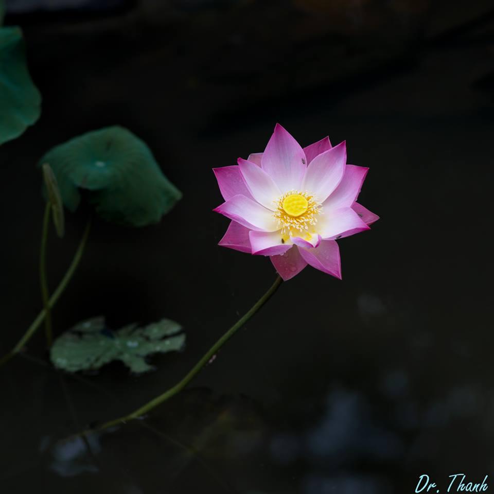 nhung-dieu-tam-niem-trong-tu-hanh