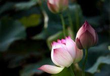 tự tánh phật, Nhất thể Tam thân Tự Tánh Phật